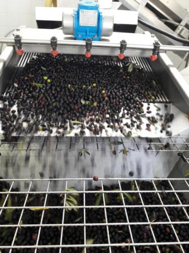 olive2-oleificio-stante